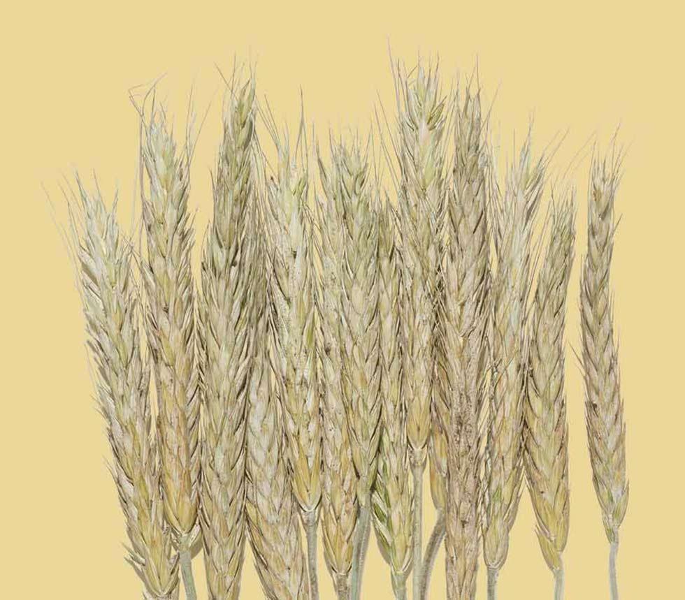 homepage-oat-tout-image.jpg